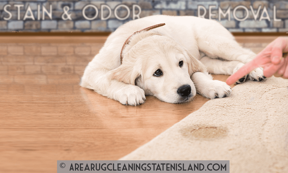 Pet Stain and Odor Cleaning